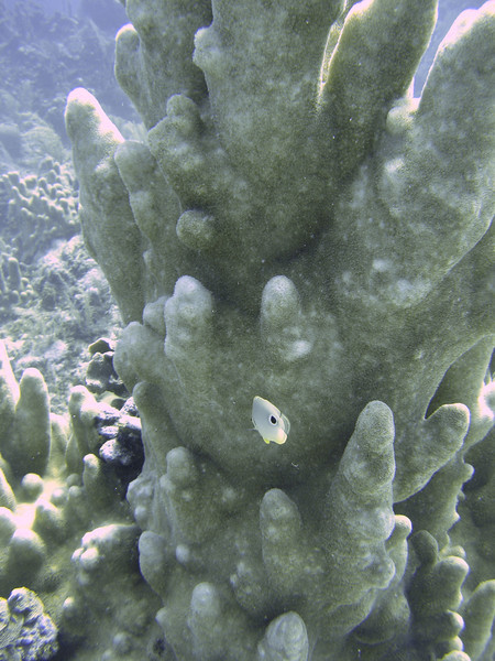 A small fish in front of coral.