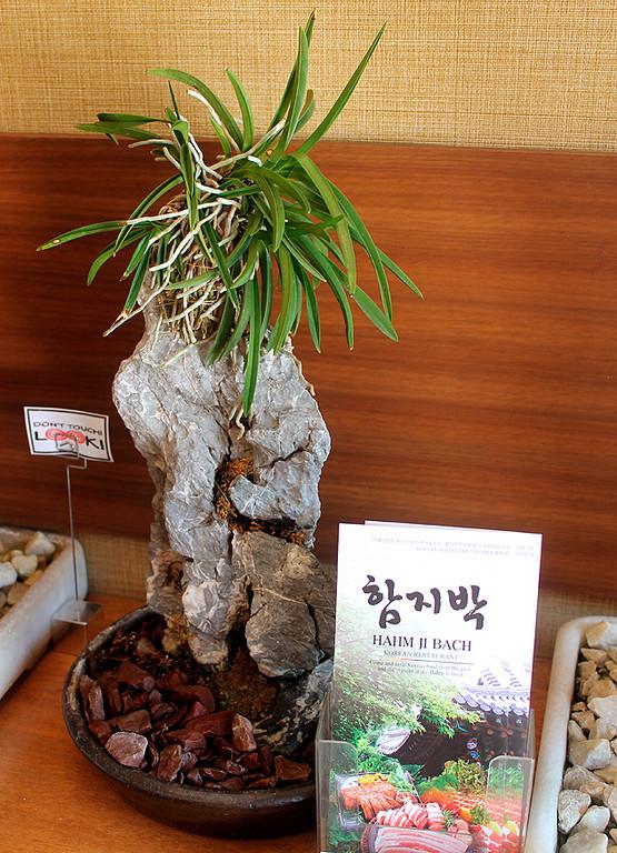 Bonsai in the foyer