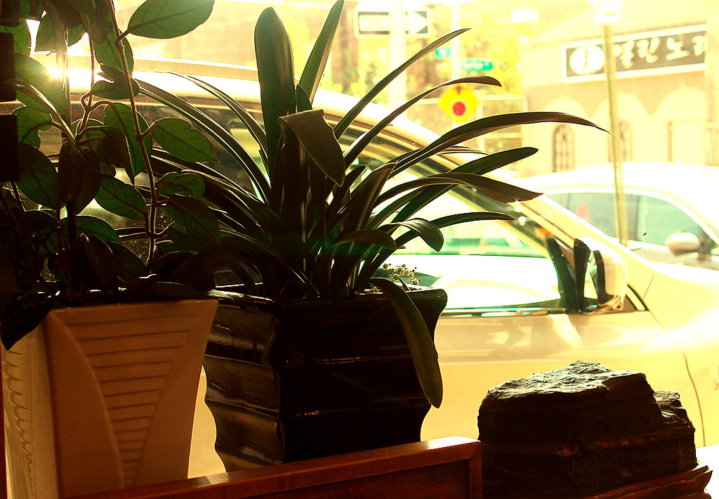 Plantscaping along the front windows