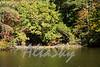 Lake Jeanette Fall 2016005