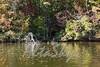 Lake Jeanette Fall 2016018