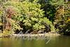Lake Jeanette Fall 2016006