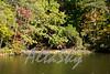 Lake Jeanette Fall 2016007