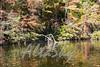 Lake Jeanette Fall 2016017