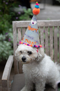 Puppy Lulu's 12th Birthday