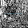 Wolf 4 BW