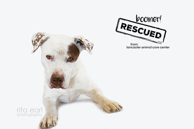 adoptBOOMER