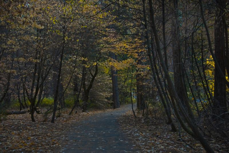 Yosemite in the Fall 2007