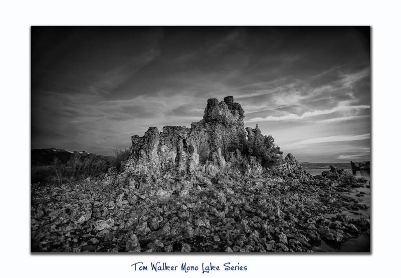 Tom Walker Photography  - Tom Walker Photography