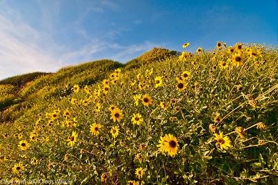 Field of Gold - Newport Beach Big Corona 2010