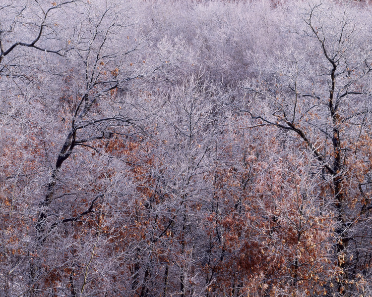 Ice Storm V