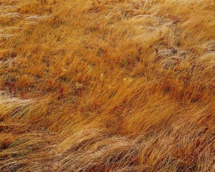 Brown Grass & Morning Dew III