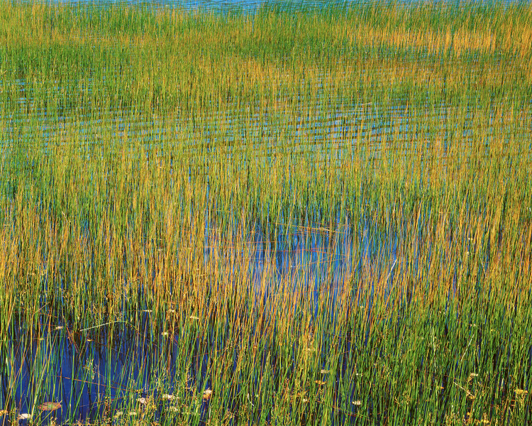 Green and Yellow Grass, Blue Water