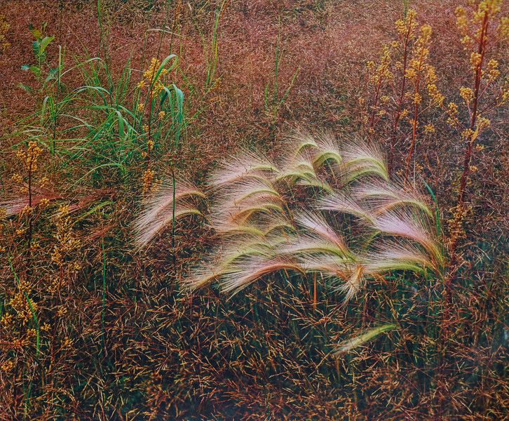 Textures In Grass I, Anchorage, Alaska 1977