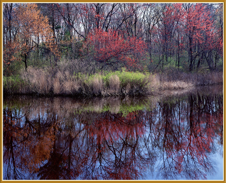 Maple Trees In Flower And Riverbank II