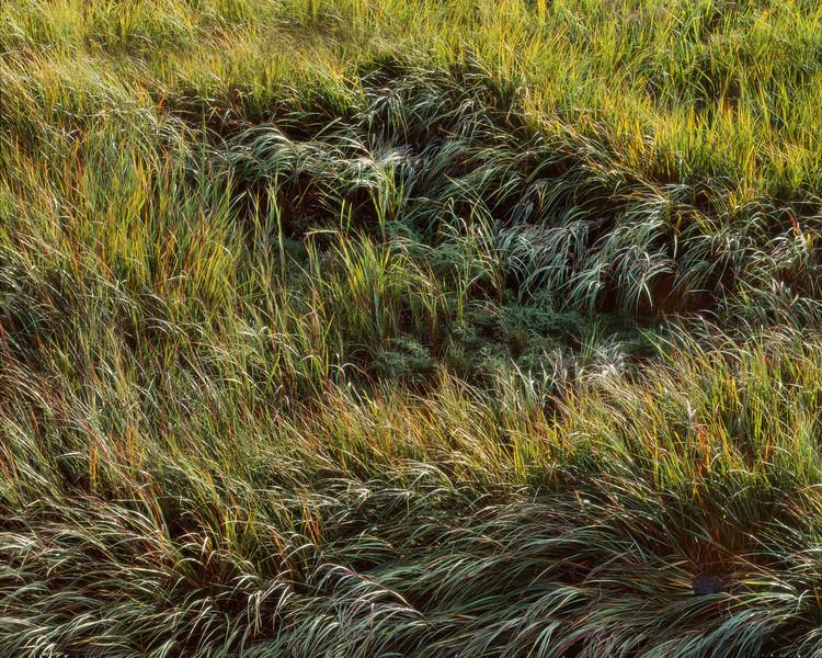 Wilting Marsh