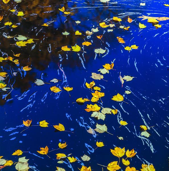 Fallen Leaves. Blue Water