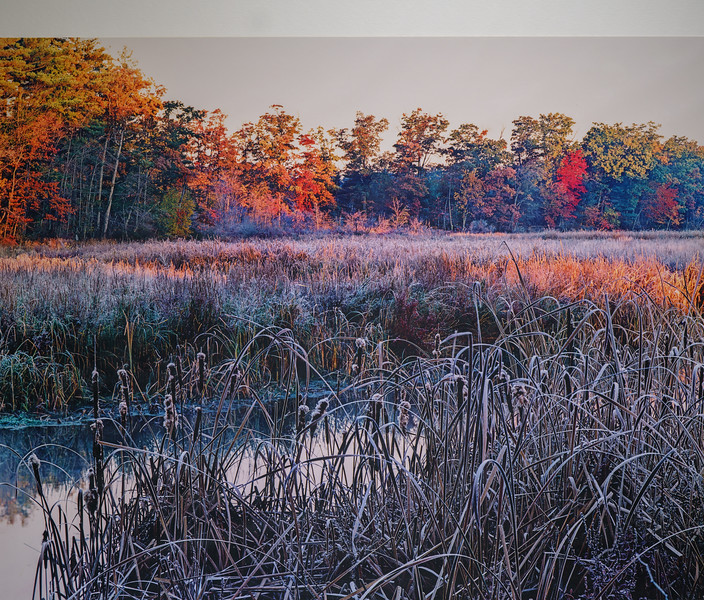 Frost Along a Stream