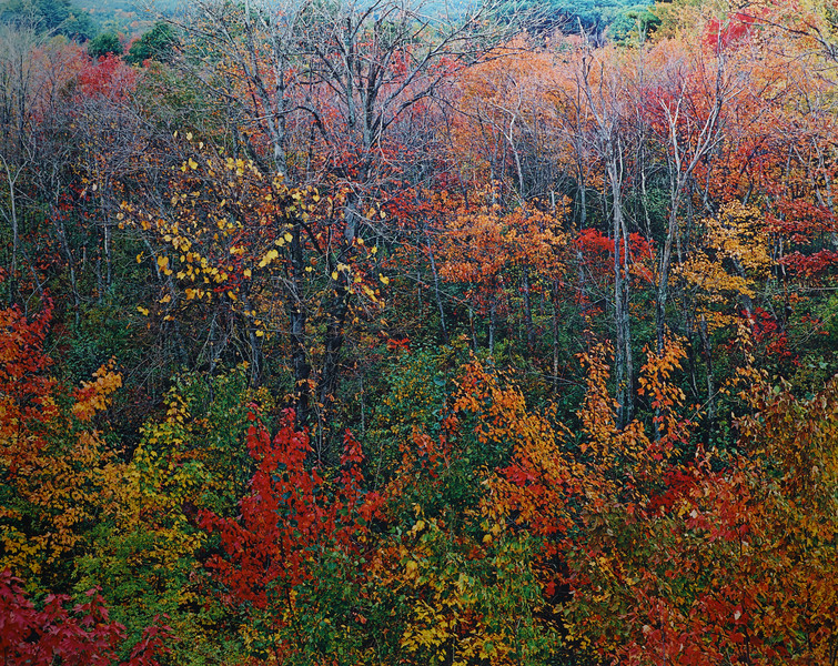 Autumn Montage