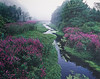 Dreamed Brook, Beaver Brook,  Interstate 495, Littleton, Massachusetts 1987