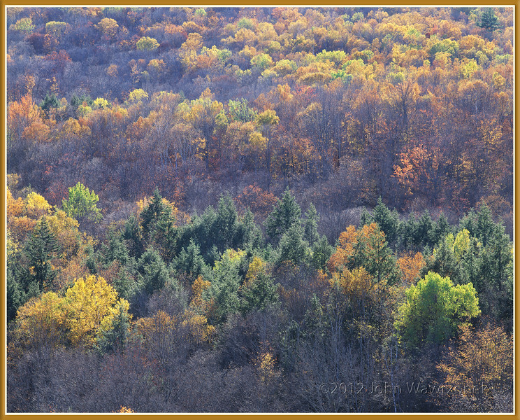 Hillside, Late Fall I