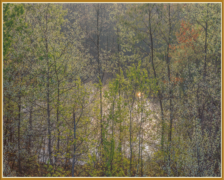 Poplar Trees & Vernal Pool