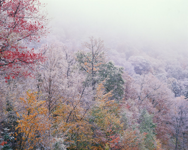 Last Leaves And First Snow III