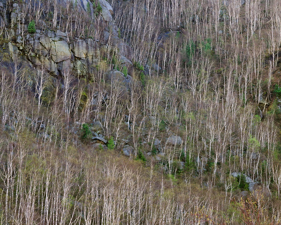 Spring Cliffside III