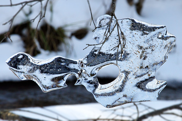 Ice formation hangs from twig by snowy creek • Jamesville, NY • 2012