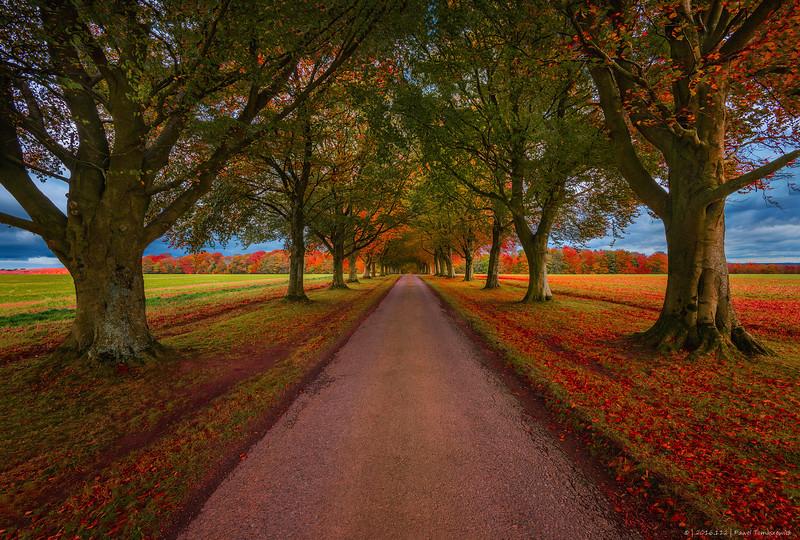 2016.112 - UK - AutumnAlleyOfTrees III - HRes