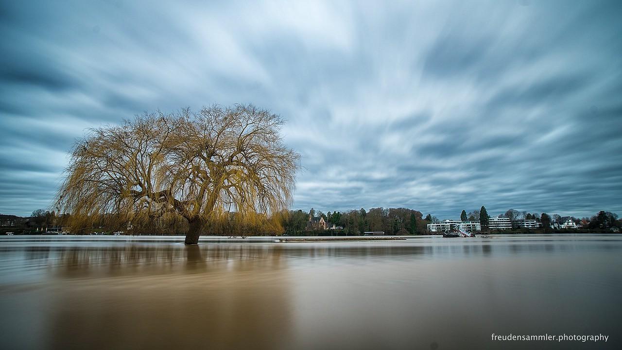 Rhein Hochwasser Königswinter-Niederdollendorf - high tide at river rhine Jan, 7 2018