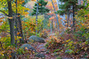 Fall foliage on rock-strewn trail along Thirteenth Lake • Adirondacks NY • 2012