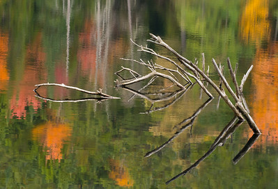 Snags and autumn reflections • Finger Lakes National Forest, NY • 2014