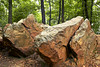 LARGE ROCKS IN THE WOODS