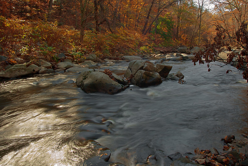 AUTUMN CREEK SCENE