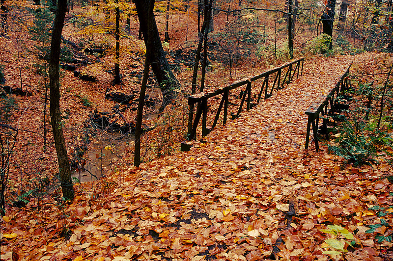 THE LEAF COVERED TRAIL