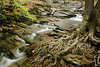 SUMMER CREEK 2237_filtered