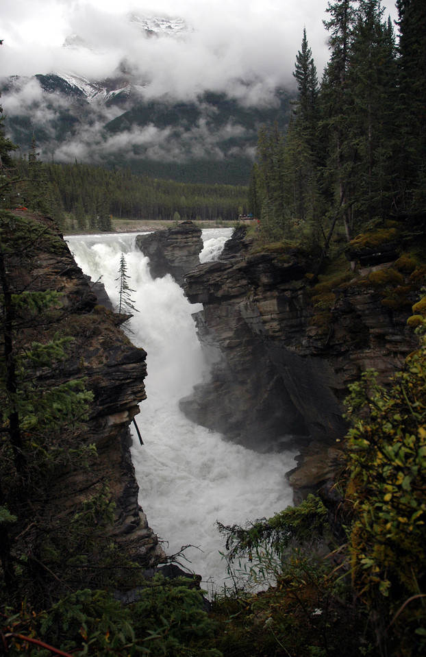 Columbia Glacier waters heading for Athabasca Falls<br /> Jasper National Park