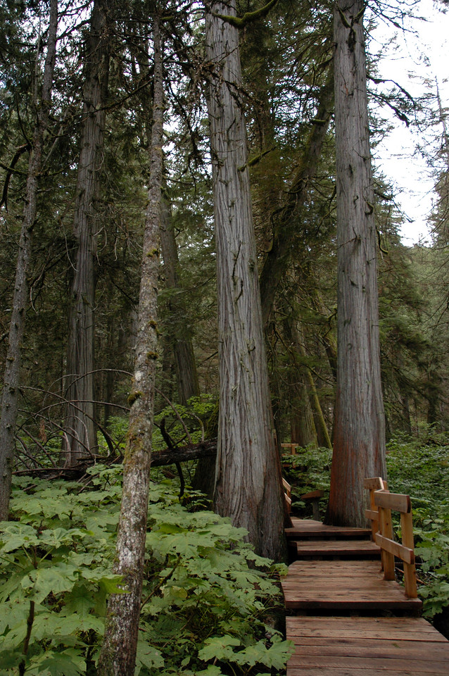 Giant Cedars Trail boardwalk<br /> Mt. Revelstoke National Park, BC