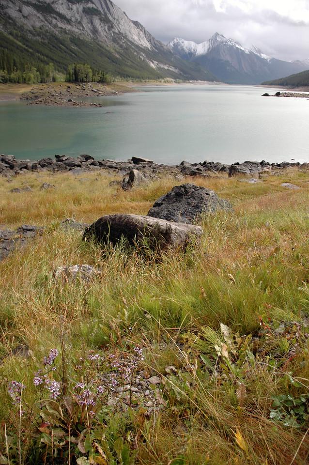 meadow above Medicine Lake<br /> Jasper National Park