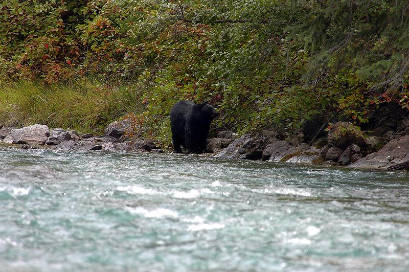 river's edge<br /> Whiteswan Provincial Park