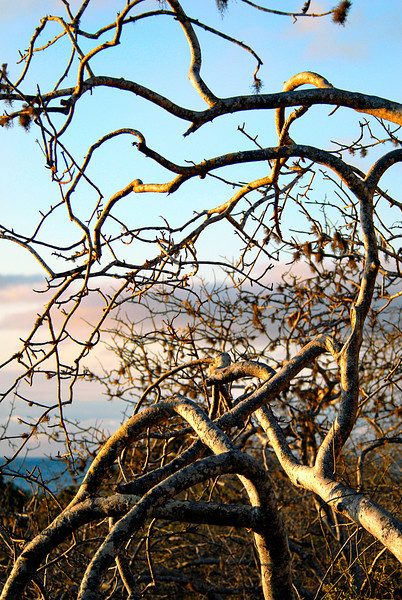 sunset on the Pacific through the tree branches-Floreana Island 12-17-2007