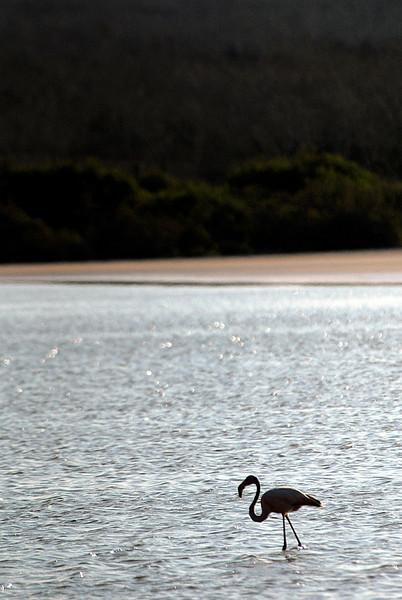 flamingo silhouette in lagoon-Punta Cormorant-Floreana 12-17-2007