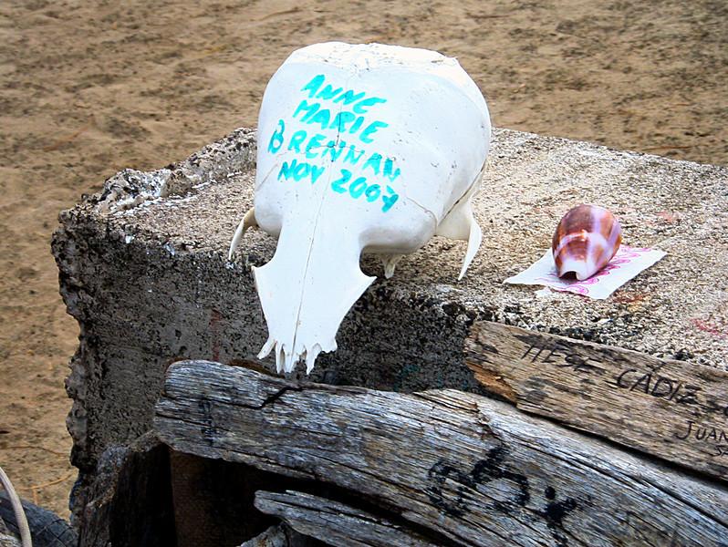 P O  Bay skull-Floreana, Galapagos 12-17-2007