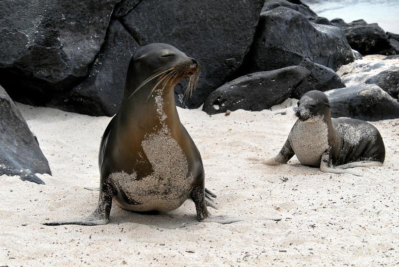 sea lion posers-Punta Suarez-Espanola-Galapagos Islands 12-16-2007