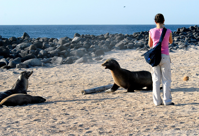 sea lion family reunion-N  Seymour beach-Galapagos Islands 12-15-2007