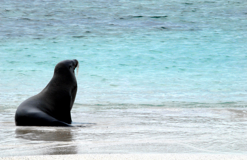 sea lion meditating @ the shoreline-Punta Suarez-Espanola Island-Galapagos 12-16-2007