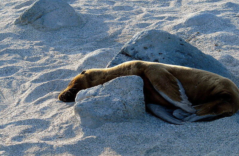 sea lion snoozing between a rock and a hard place-N  Seymour Island-Galapagos 12-15-2007
