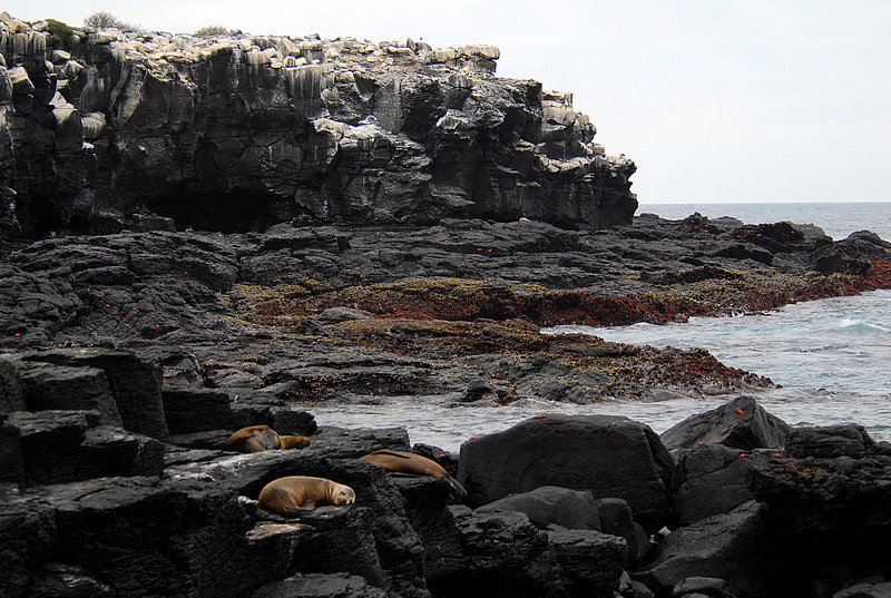 Punta Suarez lava laced with booby poo, sleeping sea lions, and Sally Lightfoot crabs-Espanola Island 12-16-2007