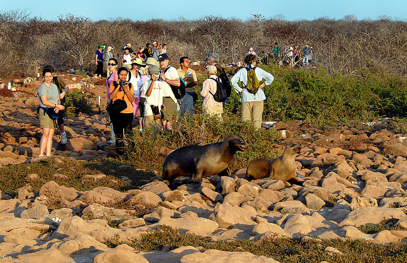 Amy, Prema, Pavan, Rob, Jonathan, sea lion crossing-N  Seymour Island-Galapagos 12-15-2007